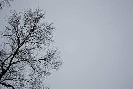 Winter tree against gray sky