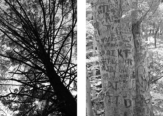 Black and white tree photos, one with graffiti