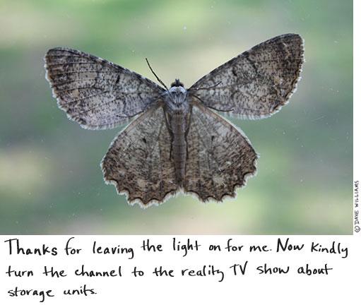 Moth on the screen door