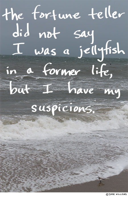 The fortune teller didn't say I was a jellyfish in a former life, but I have my suspicions.