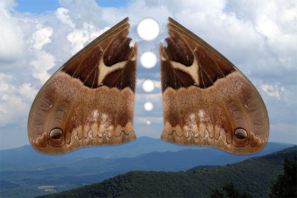 Moth wings above clouds and mountains