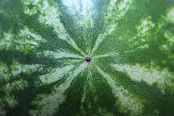Watermelon close-up