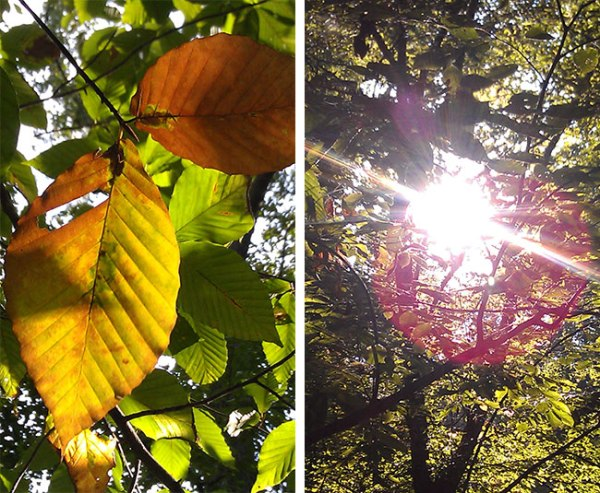 Two photos of sunlight through leaves