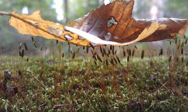 Leaf resting on moss on fallen tree