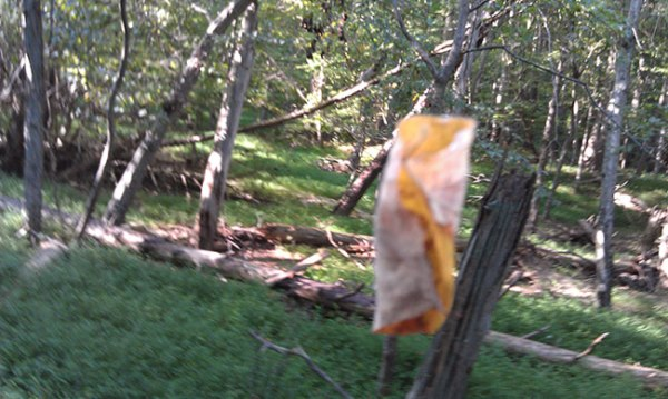 Leaf hanging by spider thread