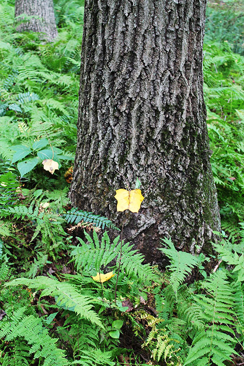 Yellow leaf in the forest