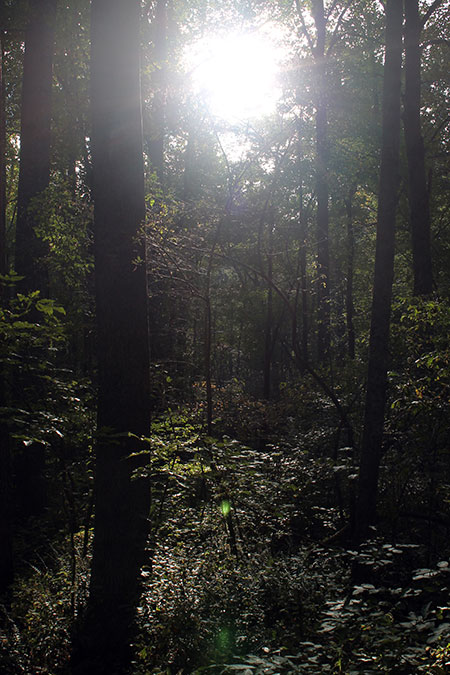 Sunlight through woods