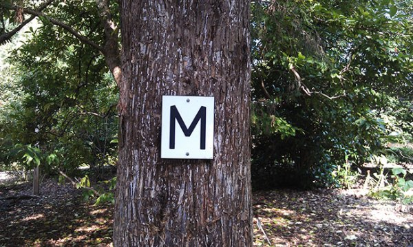 M sign on a tree