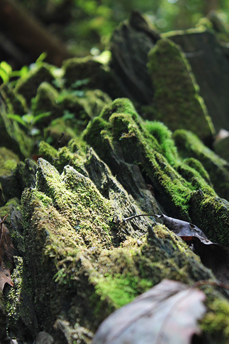 Photo of moss on rocks