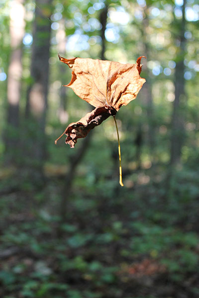Floating leaf - stuck in spider's web in the woods