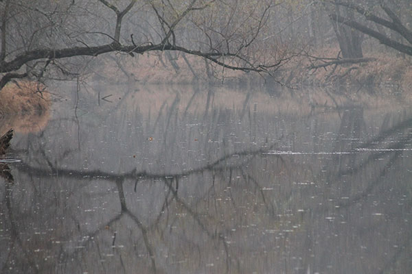 Reflection of leafless tree in a stream on foggy morning