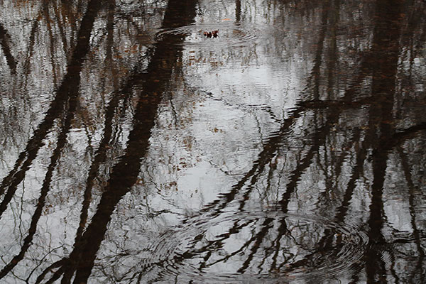 Reflections of trees in stream with leaf on surface