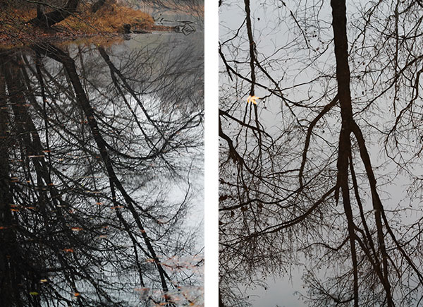 Reflections of leafless trees in stream
