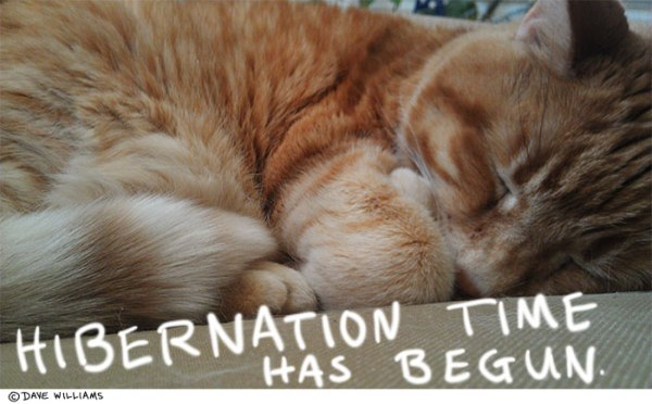 Photo of a sleeping cat, with caption: Hibernation time has begun