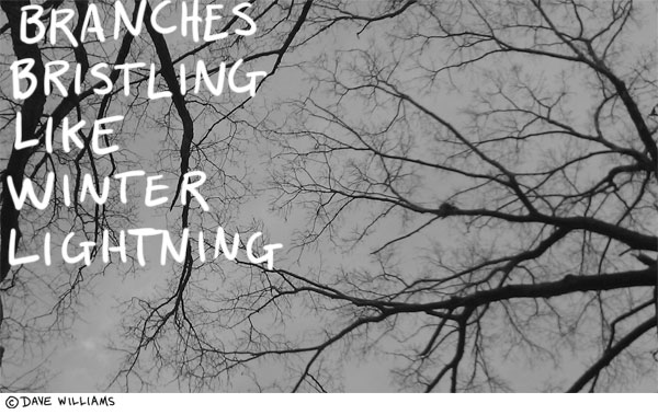 Tree branches bristling like winter lightning