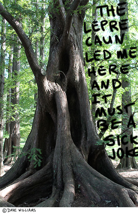 Photo of a tree, with the caption: The leprechaun led me here, and it must be a sick joke